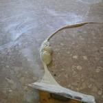 tratamiento de suelos (3)